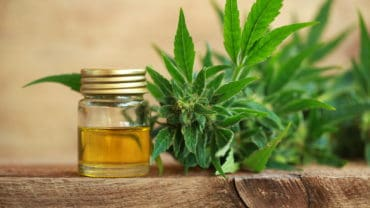 medicine cannabis oil and hemp extract marijuana