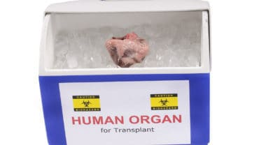 heart for transplant in an ice chest ready for transportation to recipient